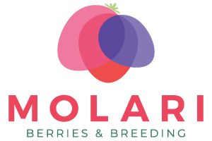 Vivai Molari - Berries & Breeding